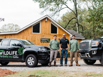 Wildlife Solutions and Pest Control